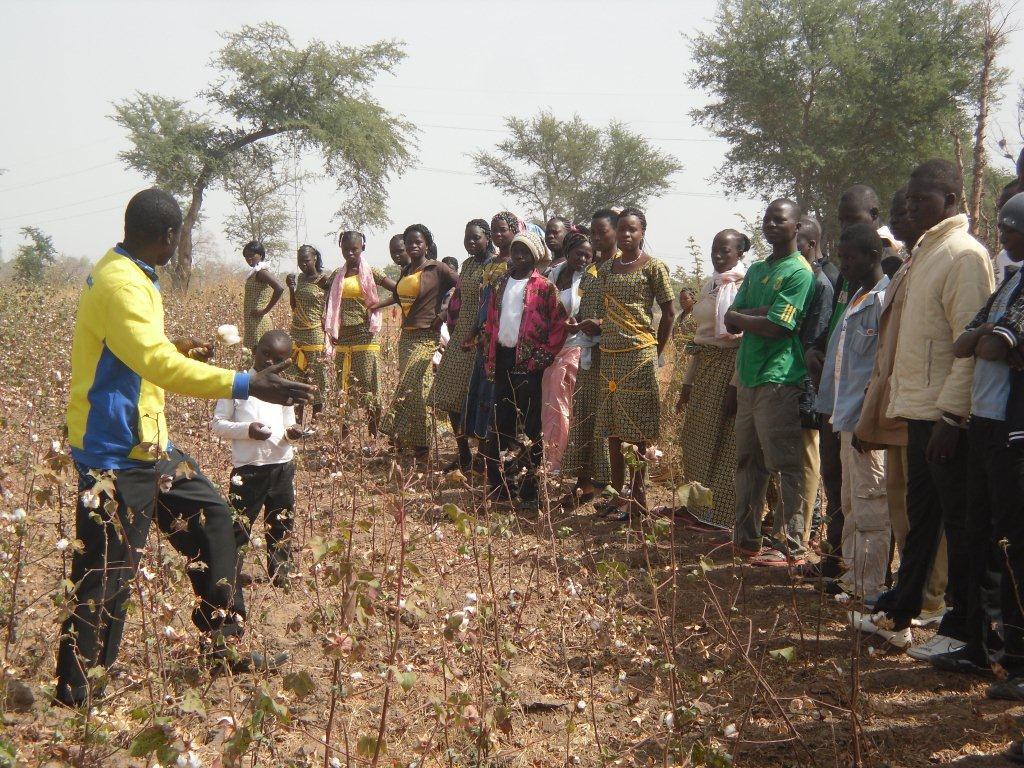 visite de champs de coton : Issa explique..